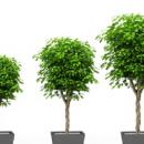 Fundacja Ogrody Twojego Sukcesu zaprasza na warsztaty