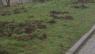 Uwaga: Odstrzał redukcyjny dzików w Smolcu