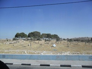 Pole Pasterzy w Betlejem.