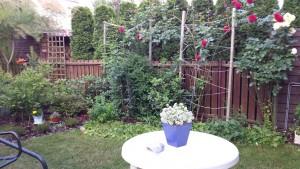 ogród p. Emilii