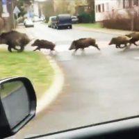 Nie dokarmiajmy dzikich zwierząt